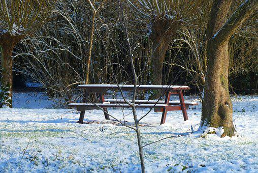 Bench, Forest, Snow, Winter, Cold, Landscape, Nature