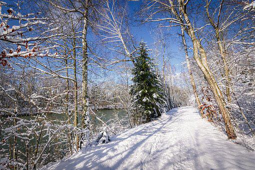 Winter, Snow, Nature, Landscape, Wintry, Tree, Cold