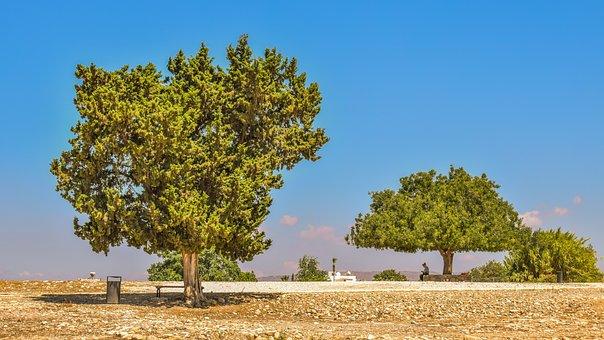 Trees, Landscape, Cyprus, Aphrodite's Sanctuary