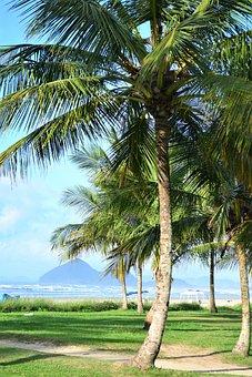 Coconut Tree, Beach, Sand, Palm Tree, Green, Mar, Water