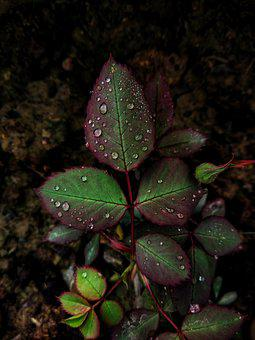 Leafs, Green Leaf, Blurred Background, Black Background