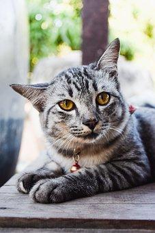 Animals, Pets, Cat, Cute, Sleep, View