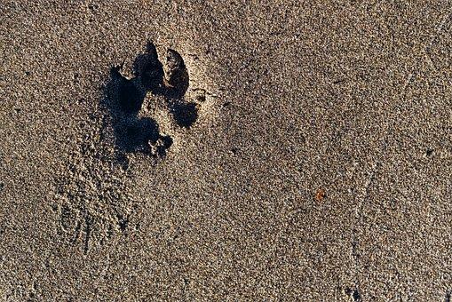 Paw, Print, Paw Print, Sand, Dog, Footprint, Track