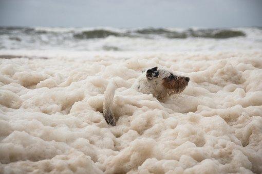 Dog, Doggy Style, Foam, Pet, Animal, Cute, Terrier, Wet
