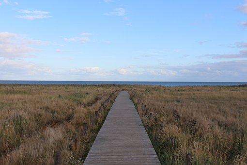 Sylt, Kampen, Dune Landscape, Web