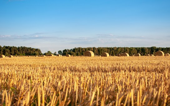 Harvest, Corn, Hay, Sheaves, Field, Village