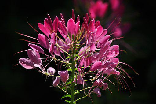 Flower, Flowering, Plant Plant, Beauty In Nature