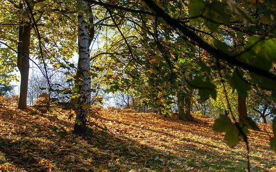 Foliage, Autumn, Tree, Park, Nature, In The Fall