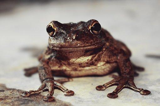 Nature, Frog Cuban, Soil, Front