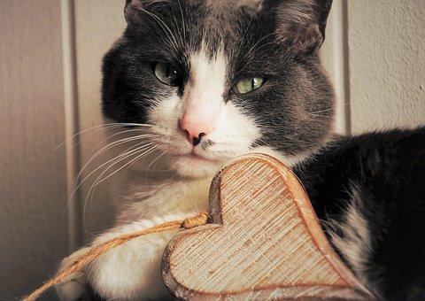 Valentine's Day, Cat, Love, Mustache, Animal, Fur