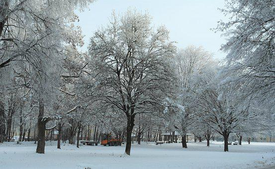 Winter, Hoarfrost, Trees, Park, Cold, Ice, Snow, Nature
