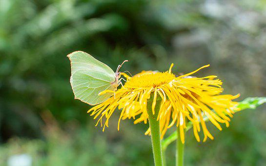 Butterfly, Nature, Insect, Summer, Flowers, Spring