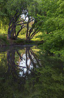 Pond, Reflection, Tree, Fence, Leaves, Lake