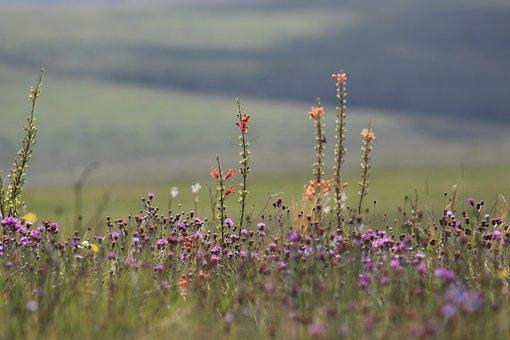 Flowers, Field, Minas, Serra Da Canastra, Nature, Flora