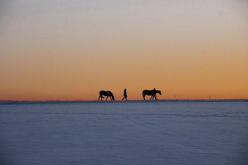 Winter, Snow, Nature, Cold, Landscape, Sunset, Animals