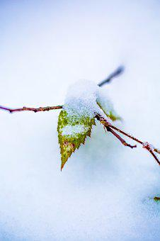 Winter, Sheet, Nature, Macro, Snow, Forest, Yellow