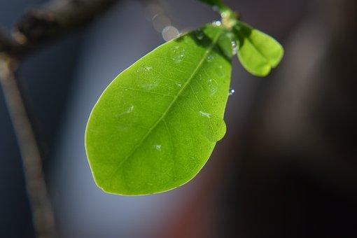 Leaf, Rain Drops, Nature, Water, Leaves, Green, Wet