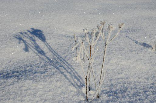 Winter, Snow, Nature, Frost, Winter Magic