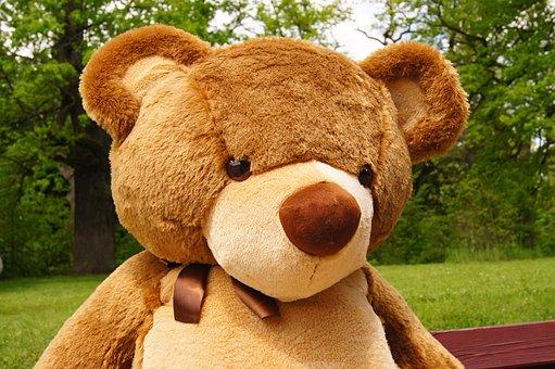 Teddy Bear, Plush, Nature, Toy, The Bear, Sweet, Funny