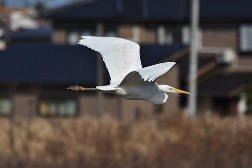 Animal, River, Waterside, Residential, Building, Bird