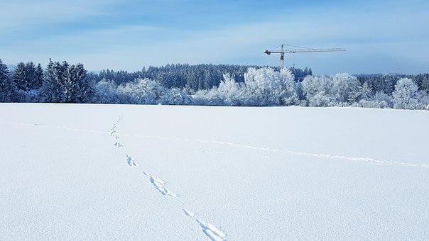 Winter, Snow, Forest, Nature, Technology, Crane