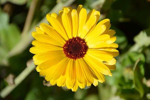Gerbera, Deep Love, Flower, Plants, Spring, Summer