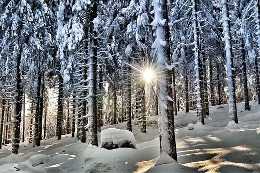 Winter, Winter Forest, Snow, Wintry, Nature