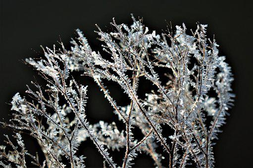Winter, Frost, Freezing, Ice, Crystals, Icy