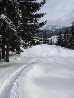 Winter, Snow, Winterspaziergang, Winter Hike, Nature