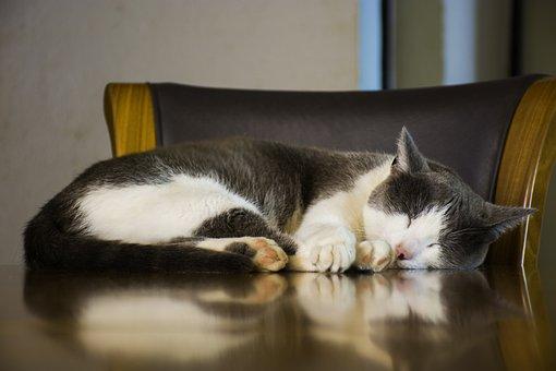 Rest, Cat, Animals, Feline, Pet, Pets, Adorable, Kitty