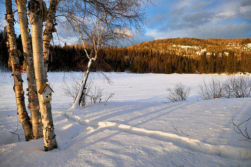 Landscape, Winter, Nature, Trees, Birch, Mountain, Cold