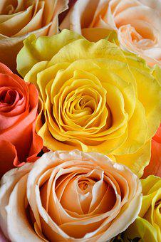 Roses, Bouquet, Flowers, Love, Flower, Flora, Petals