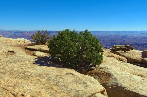 Juniper On The Edger, Desert, Rock, Canyonlands
