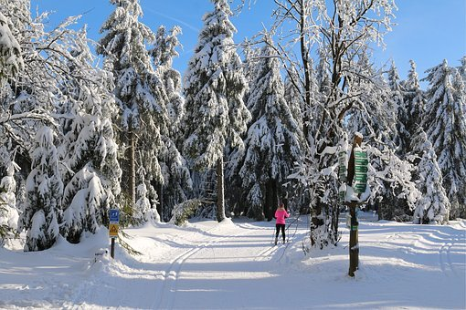 Skiing, Wintry, Winter, Cross Country Skiing, Snow