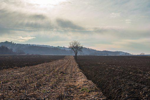Field, Brown, Gold, Soil, Tree, Nature, Sky, Clouds