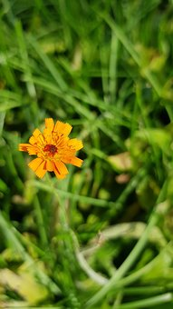 Blossom, Bloom, Orange, Flower, Plant, Close Up, Green