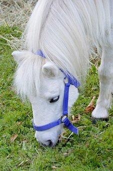 Pony, Horse, Mane, Equine, Cute, Equestrian