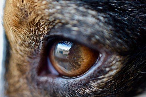 Eyes, Eye, Dog, Macro, Eyelashes, Mirror, Jack Russel