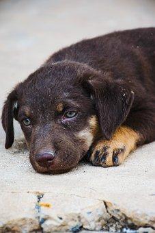 Dog, Pet, Animal, Sad, Lonely, Brown, Miss, Love, Sleep