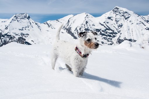 Dog, Snow, Mountains, Deep Snow, Alpine, Winter, Nature