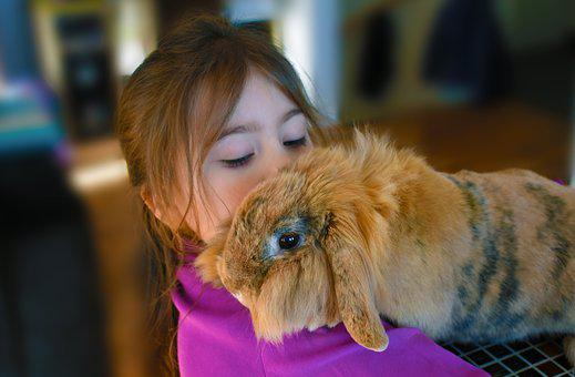 Girl, Rabbit, Pet, Childhood