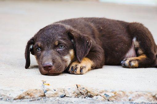 Dog, Pet, Animal, Sad, Love, Miss, Sleep, Brown, Eye