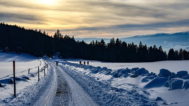 Snow, Path, Walkers, Promenade, Trees, Winter, Cold