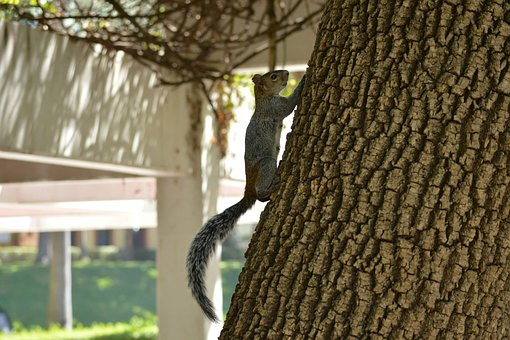 Squirrel, Tree, Nature, Guadalajara, Mexico, Day