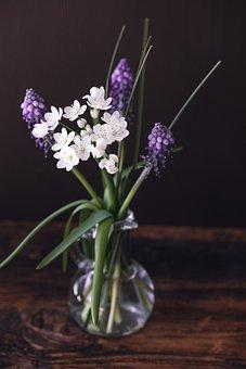 Flowers, Tender, Spring Flowers, Still Life