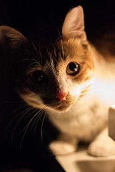 Cat, Animal, Low Light, Macro, Eyes, Tail, Mammals