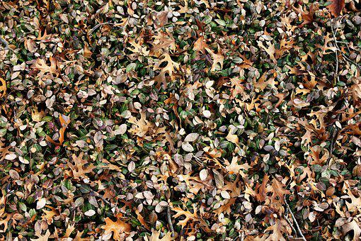 Leaves, Autumn, Outdoor, Fall, Nature, Texture, Brown