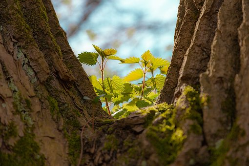 Sheet, Leaves, Tree, Stump, Forest, Background, Green