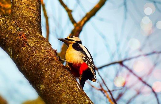 Woodpecker, Bird, Useful, Tree, Sky, Animals, Nature