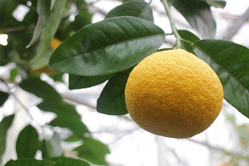 Grapefruit, Fruit, Nutrition, Citrus, Healthy, Vitamins